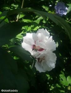 ... waren bei den Bienen ...